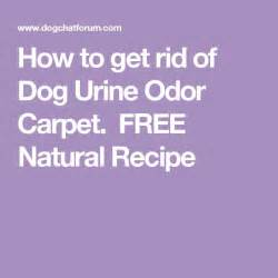 how to get rid of pee smell on bed 95 best images about dog play area on pinterest
