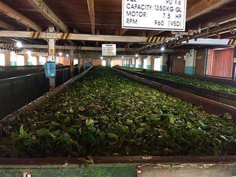 kurugama tea factory kandy