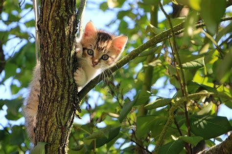 finden wohnungskatzen wieder nach hause geniales ortsged 228 chtnis wie katzen nach hause finden