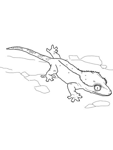 Crested Gecko Coloring Page Supercoloring Com Gecko Insect Coloring Page