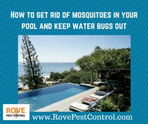 how to get rid of water bugs in bathroom water bugs archives rove pest control
