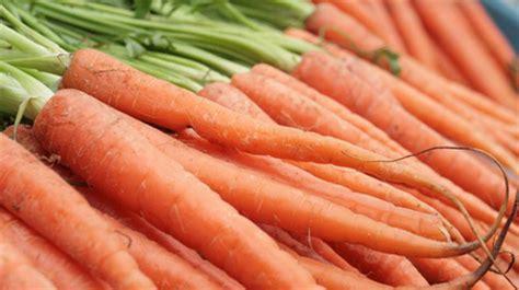 coltivare carote in vaso come coltivare le carote in vaso pollicegreen