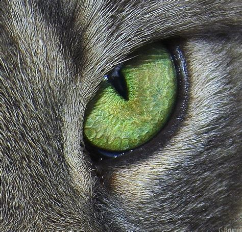 cat s eye complete dvd box 日本コロムビア 最安値比較 明石モレのブログ