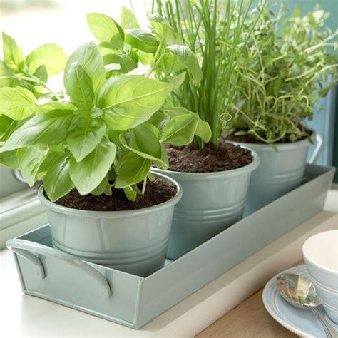 aromatiche in vaso orto in vaso orto in balcone coltivare orto in vaso