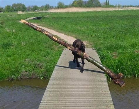 dogs with big dogs with big sticks sharesloth