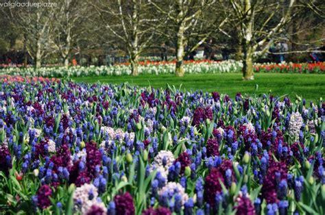 ci di fiori in olanda olanda i mille colori dei tulipani di keukenhof