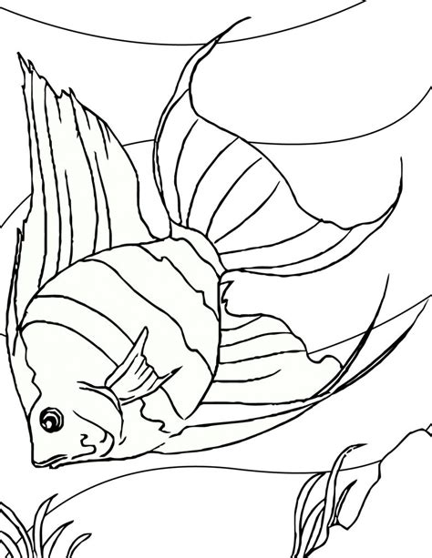 Coloring Pages For To Print by Free Printable Fish Coloring Pages For