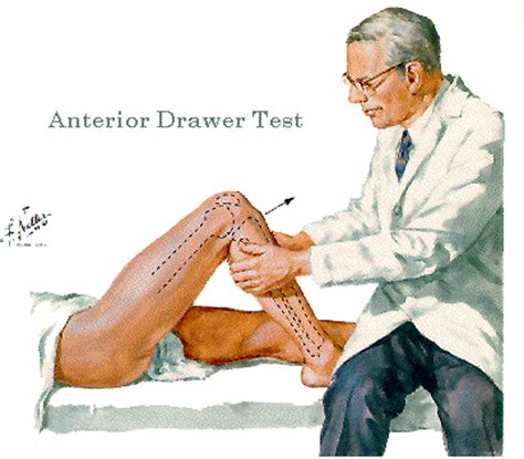 lab 7 lower limb ii leg and foot