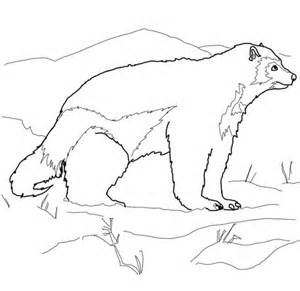 Wolverine Animal Coloring Pages pin dolphin jumping cake on