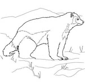 arctic wolverine coloring page supercoloring com