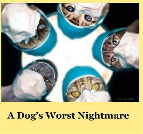 dog not eating your worst nightmare come true simplewag funny quotes before surgery quotesgram