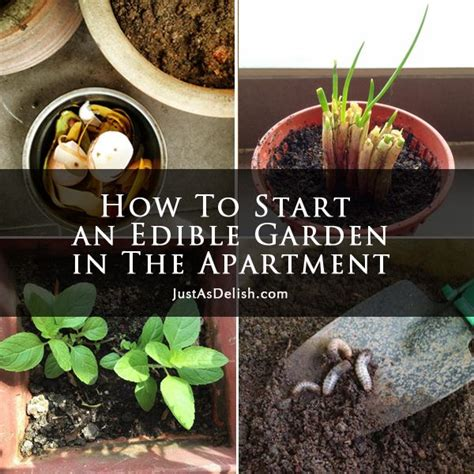 Apartment Edible Plants 1000 Images About Diy Gardening On How To