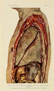 17 best images about anatomia on