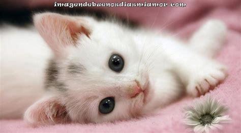 imagenes tiernas gatitos bellas imagenes tiernas de gatitos imagenes de buenos