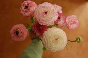 ranunculus bouquet ranunculus bouquet hd wallpaper flowers wallpapers