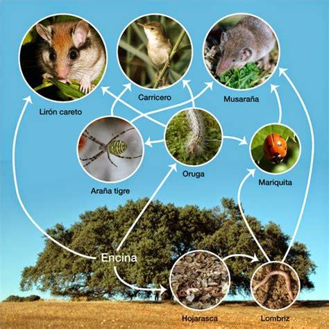 cadenas troficas bosque estepa ecosistemas