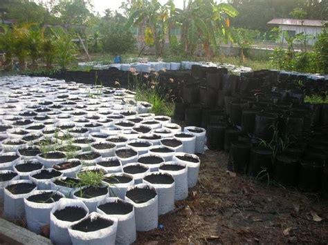 bestway agro plantation fertigasi cili fertigasi
