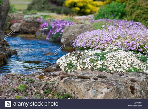 Alpine Rock Garden Alpine Rock Garden With Water Feature Stock Photo Royalty Free Image 36811755 Alamy
