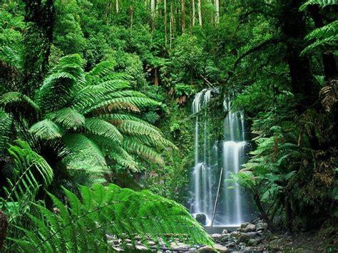 Tropical Jungle australian tropical rainforest