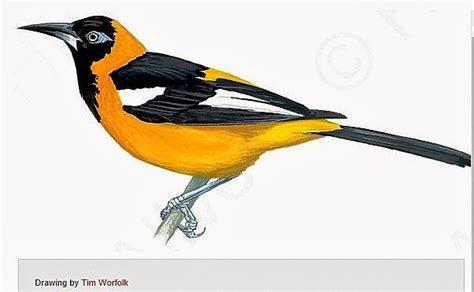 turpial ave nacional venezuela apexwallpapers com dibujo del turpial ave nacional de venezuela imagui