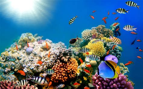 wallpaper colorful fish and interactive water tropical fish wallpaper 63 images