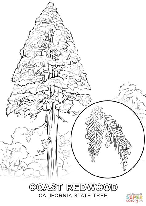 washington coloring pages washington state coloring page coloring home