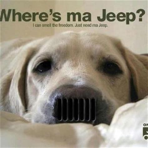 cute jeep wrangler 62 best jeep wranglers and dogs images on pinterest jeep