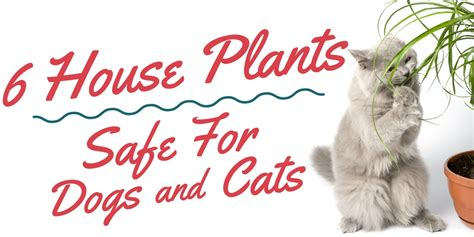 house plants safe for cats and dogs top 6 house plants safe for cats and dogs enchanted florist pasadena