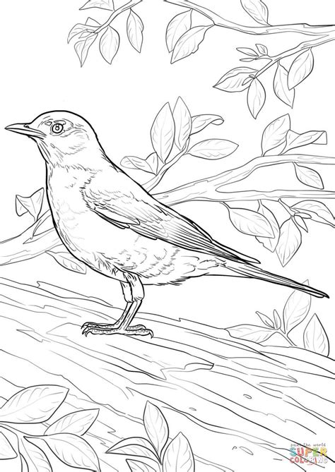 what color are robins american robin coloring page free printable coloring pages