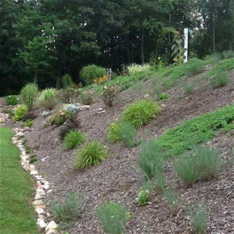 steep bank gardening pinterest