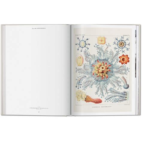 ernst haeckel 9783836526463 the art and science of ernst haeckel taschen libri it