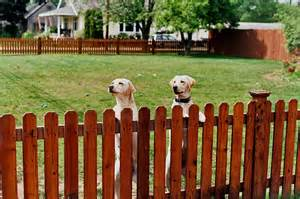 how to keep in yard news for a dog day afternoon p l a y blog fencing options to keep your pets safe and secure