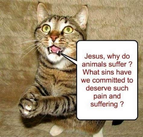 Jesus Cat Meme - debunking christianity another quot stupid atheist meme quot