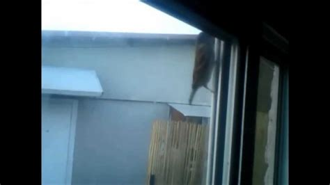 sparrow bird tapping on my window every day all the day