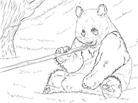coloring page of giant panda 17 best images about lilys china project on pinterest