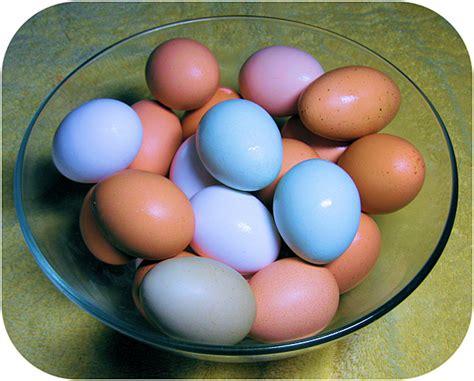 hen  lays green eggs