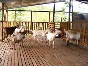Efficient Home Floor Plans low cost goat housing business diary ph