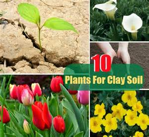 top 10 plants for clay soil diy cozy home world home