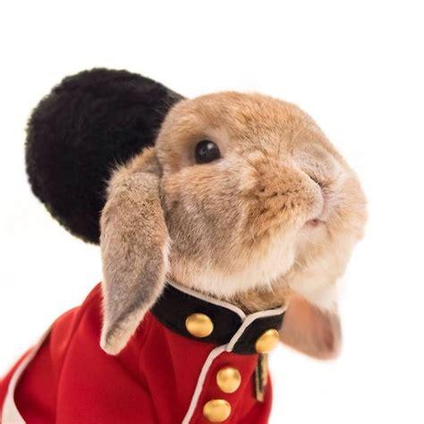 conejo de fuego 2016 este es puipui el conejo m 225 s elegante del mundo bored panda