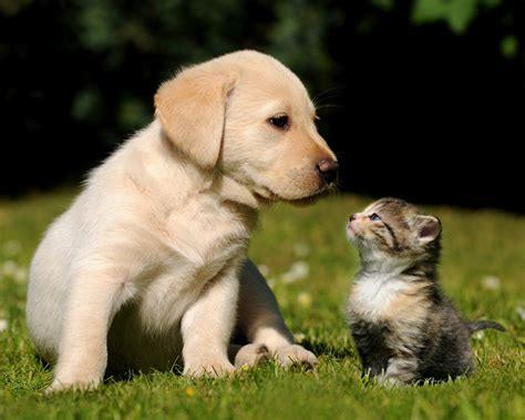 baby cats and dogs kitten latests wallpapers all wildlife photographs