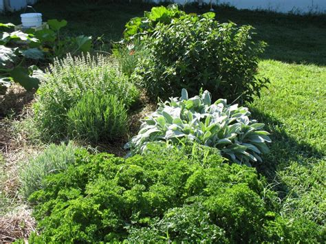gardening in zone 6 zone 6 plants how does your garden grow