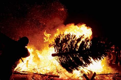 discarded christmas trees to be burned at ocean beach