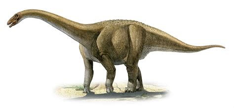 the dinosaur world s largest dinosaurs were born ready to roam