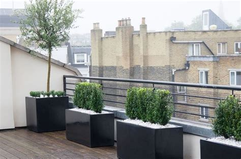 alberi da terrazzo alberi da terrazzo piante da terrazzo alberi per il