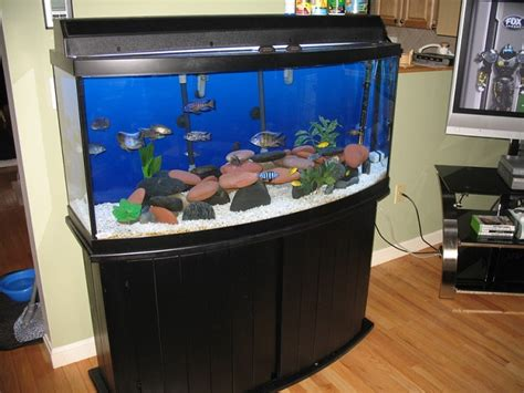 aquarium for home exploring the best bow front aquariums for your home