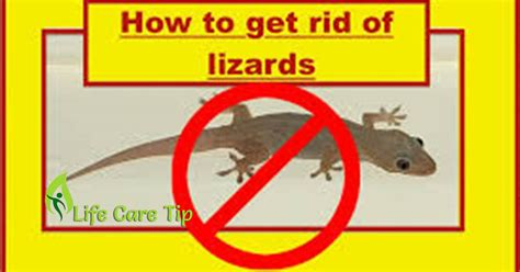 how to get rid of lizards in your house how to get rid of lizards