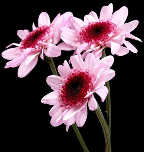 flores imagens e fotos para facebook pinterest whatsapp pgina 8 flores imagens e fotos para facebook pinterest