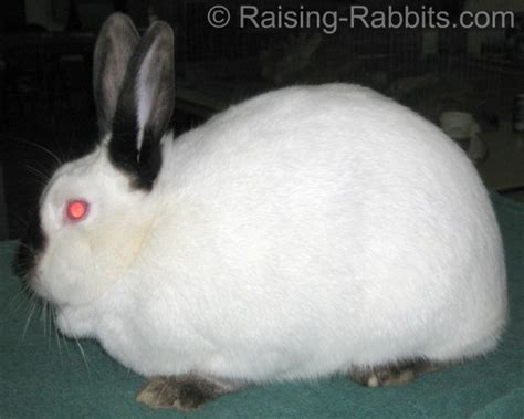 Pics Of Rabbit Hutches Types Of Rabbits 5 Body Types In Rabbits Find Your Fave