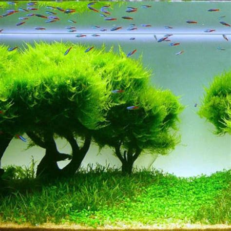 How To Make An Aquascape by Best 25 Aquarium Soil Ideas On Jar