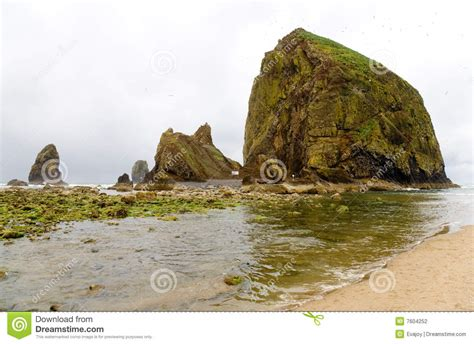 haystack rock bird sanctuary stock photography image